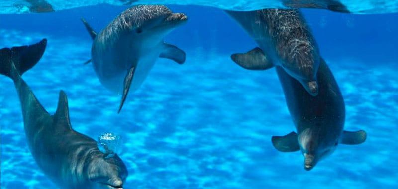 ozono delfines
